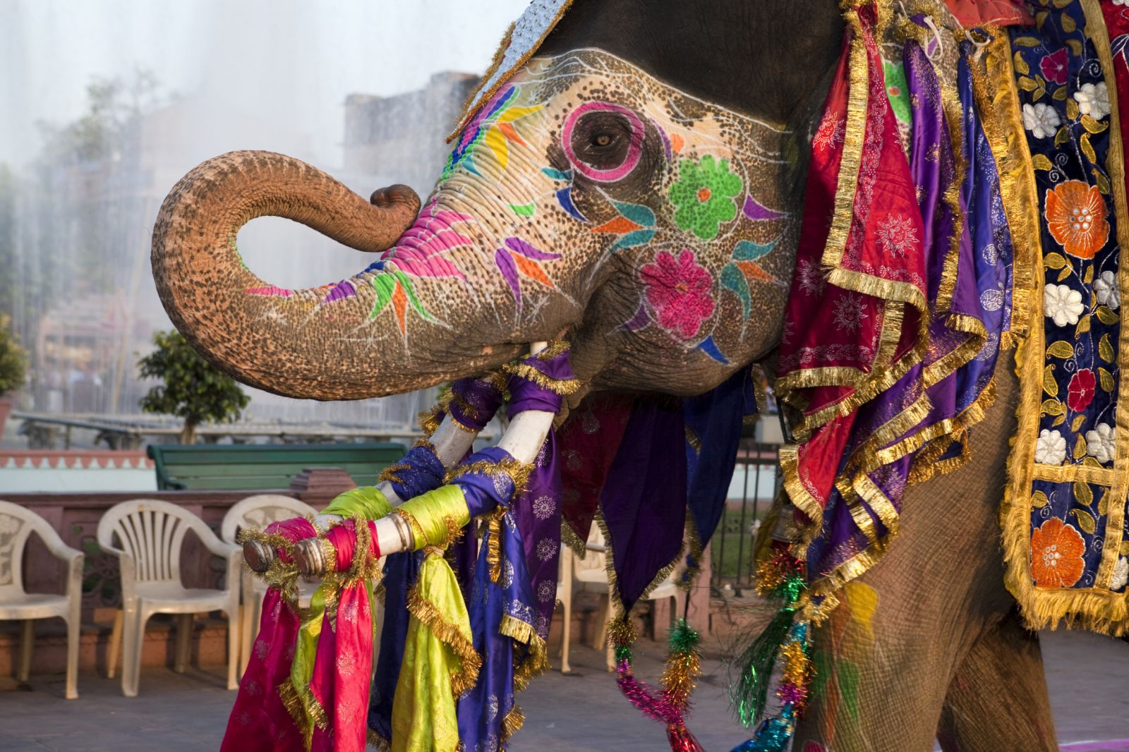This amazing elephant was dressed up for an annual parade on the occasion of Spring coming celebration. We had a lot fun!